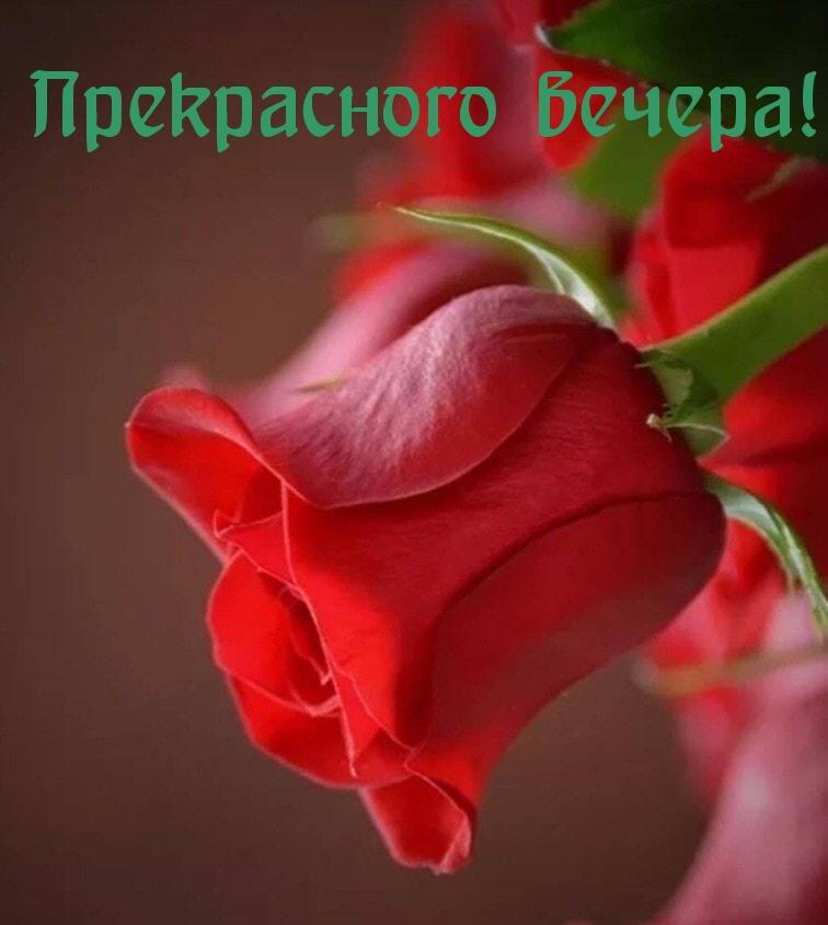 Добрый вечер картинки