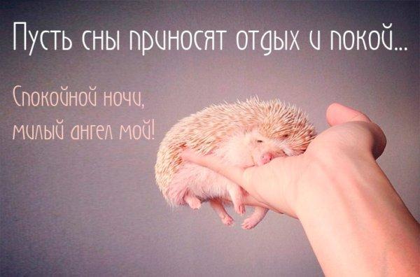 Спокойной ночи, мама
