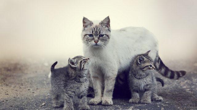 Картинки кошек с котятами