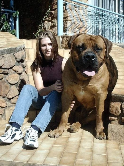 Картинки собак и собачек