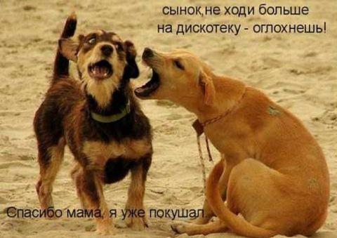 Прикольные картинки собак с надписями