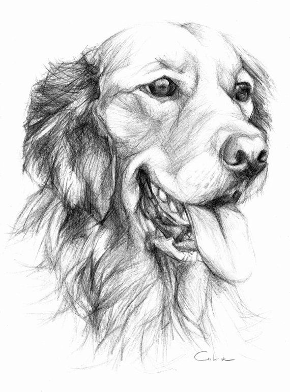 Нарисованные картинки собак. Рисунки собак