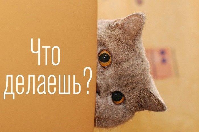 Что делаешь? картинки