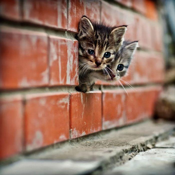 Фото котят. Картинки маленьких котят