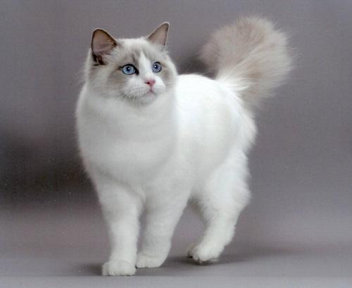 Черные, белые и рыжие кошки. Кошки разных мастей