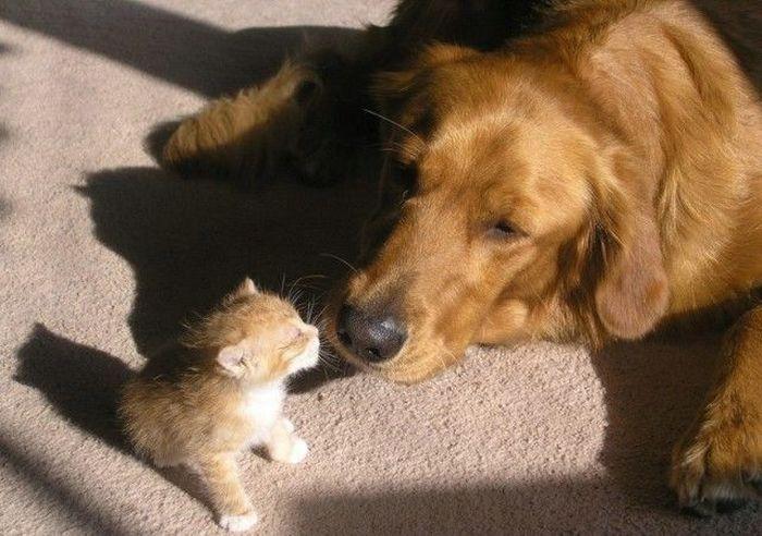 Картинки и фото кошки с собакой