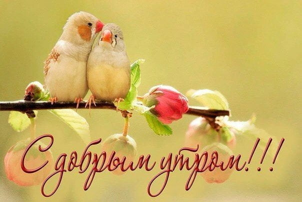 С добрым весенним утром! Картинки о весне