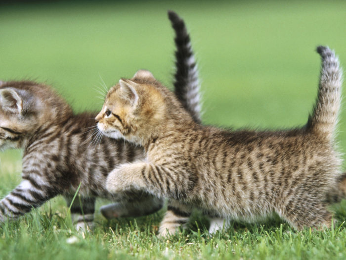 Милые и смешные котята. Картинки и фото котят