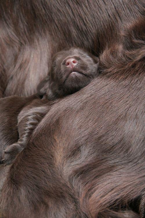 Картинки щенков. Фото щенят