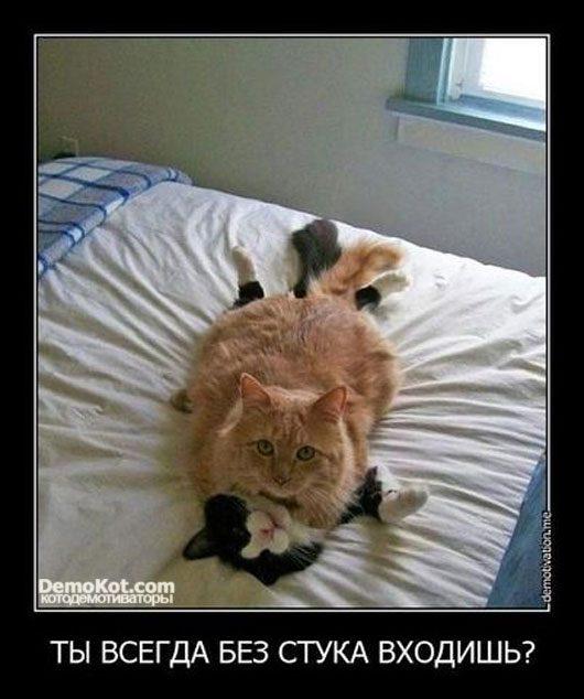 Прикольные и смешные картинки котов