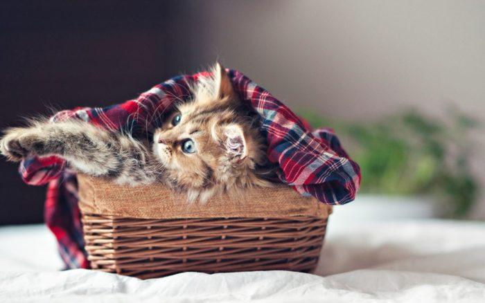 Два котенка. Картинки и фото