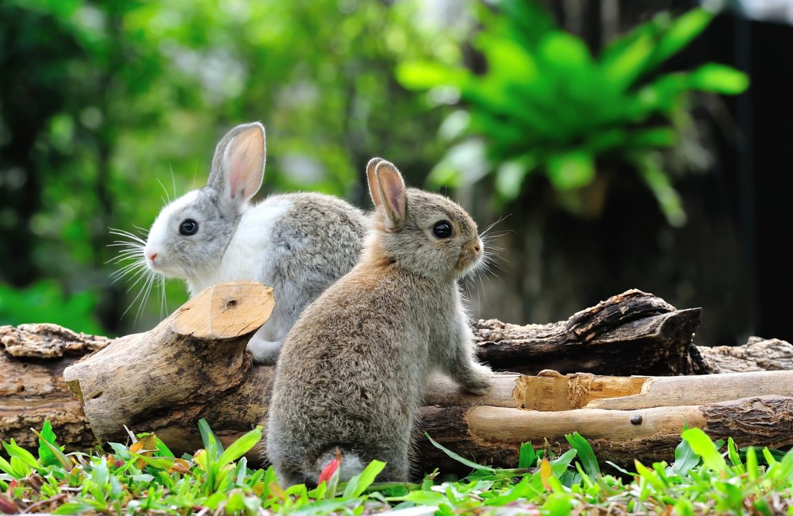 Заяц фото. Лесные зайцы фото