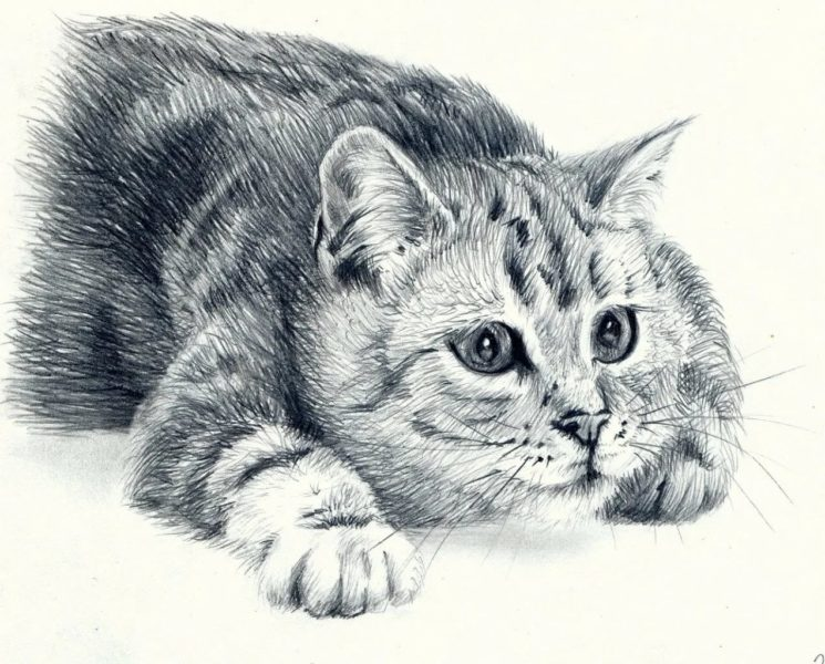 260 рисунков котов и кошек